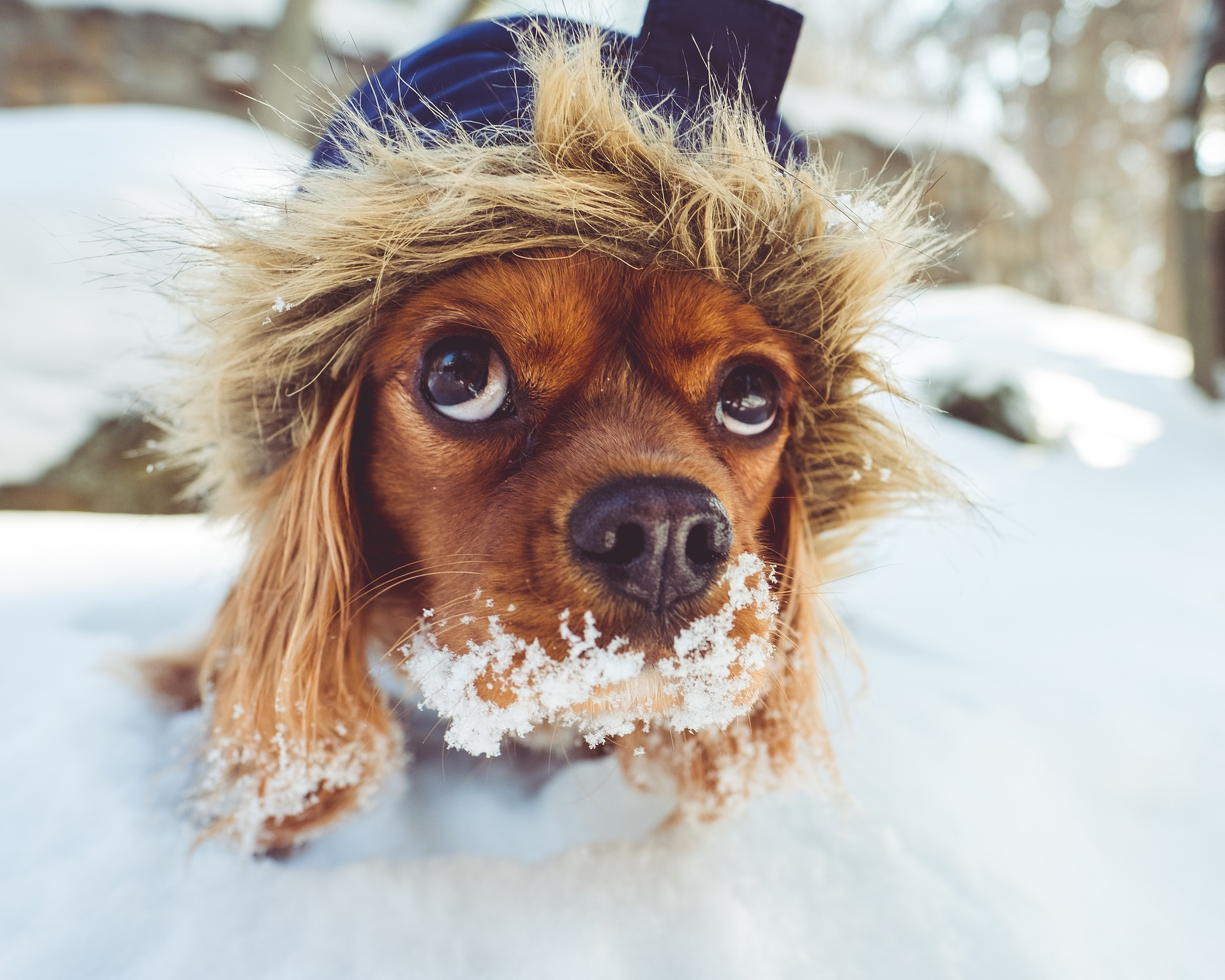 Dog in snow showing how important it is to protect those dog paws in the winter